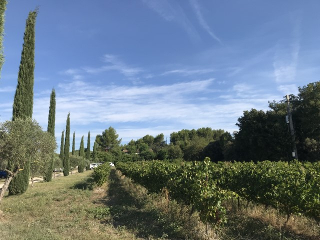 The vines at Gite St Sophie